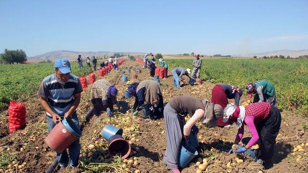 BDDK/Asarkaya: Tarımın istihdamdaki payı yüzde 18'in üzerinde
