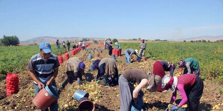BDDK/Asarkaya: Tarımın istihdamdaki payı yüzde 18
