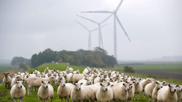 Rüzgarda kapasite artışında Çin lider