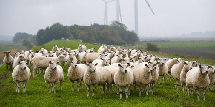 Rüzgar enerjisiyle yıllık 13 milyar dolar tasarruf mümkün
