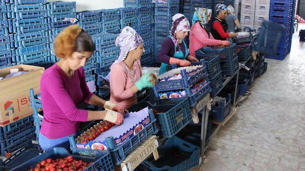 Yaş meyve sebzede Rusya açığı kapanmadı
