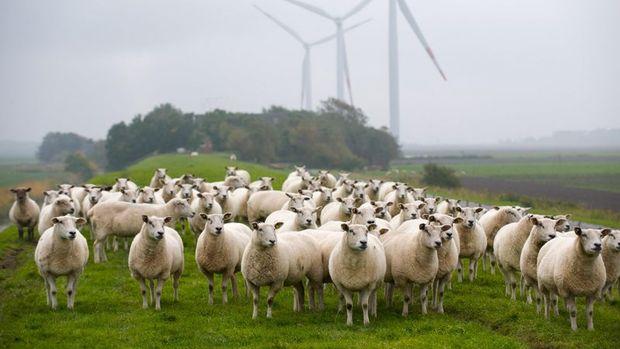 Rüzgar ihalelerinde yeni kapasite tahsisleri yapıldı