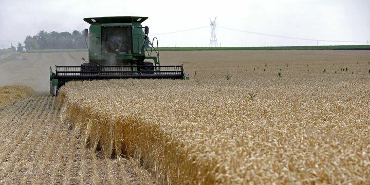 FAO: Küresel gıda fiyatları Haziran'da yükseldi