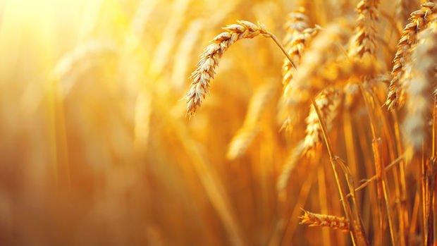 Tarım ÜFE Ağustos ayında yüzde 0.63 azaldı