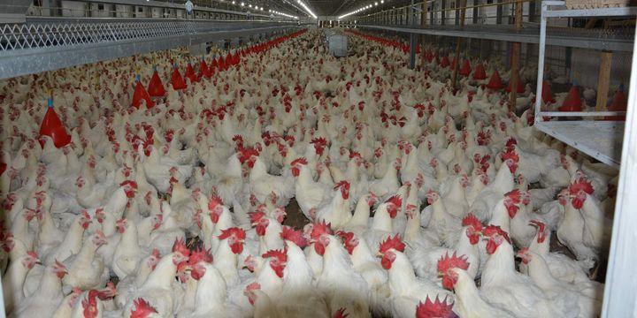 """""""Kuzey Irak krizi tavuk ihracatını etkilemedi"""""""