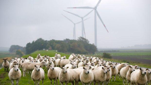 'Yenilenebilir enerji kapasitesi 2022'ye kadar yüzde 43 artacak'