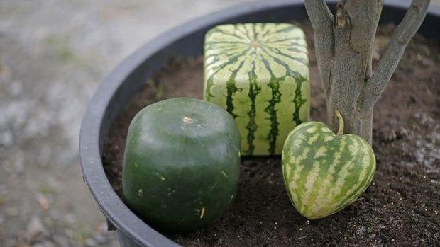 Şekilli meyve-sebzede ihracat hedefi