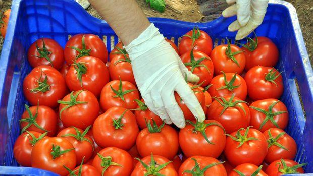 İhracatçılar Rusya'nın domates kararını kabul etmedi