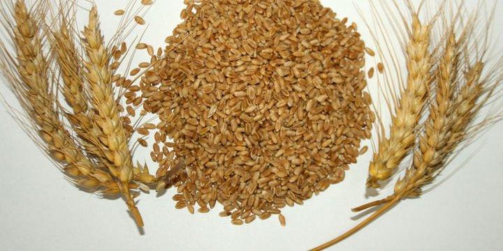 TMO 230,000 ton ekmeklik buğday alımı için ihaleler açtı
