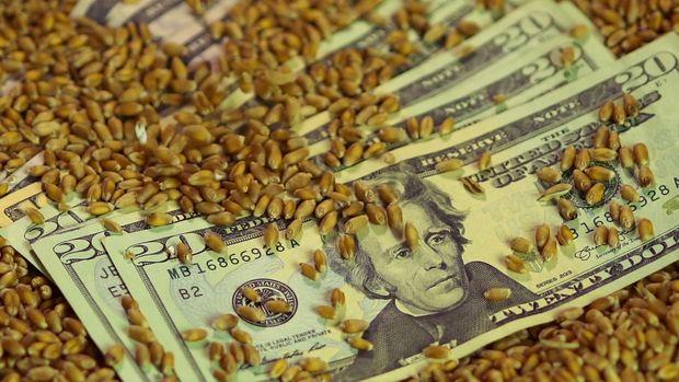 FAO: Dünyanın gıda ithalat faturası artıyor