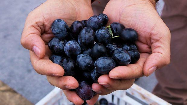 Marmarabirlik zeytinleri taneyle satacak