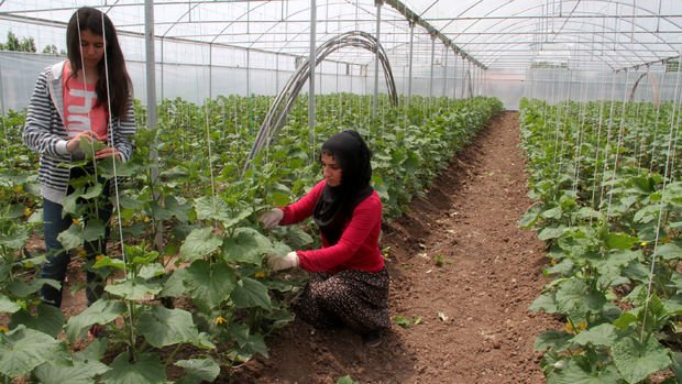 Çiftçilerin yüzde 40'ı çocuklarına kendi mesleğini önermiyor