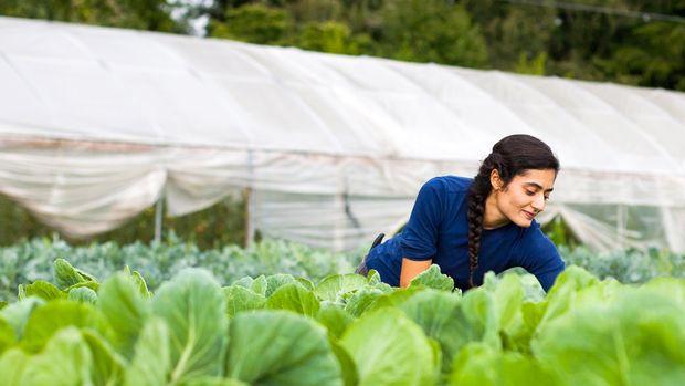 Tarım sigortalarında kadın ve gençlere yüzde 5 indirim
