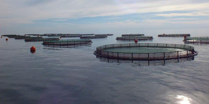 Su ürünlerinde iyi tarım uygulamaları desteği açıklandı