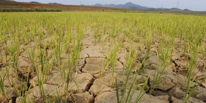 """""""Gelecek 10 yılın en büyük küresel riski iklim değişikliği"""""""