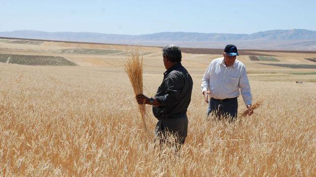 Tarımsal gayri safi hasıla 188,6 milyar lira oldu