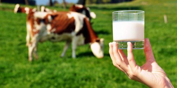 Toplanan inek sütü miktarı şubatta arttı