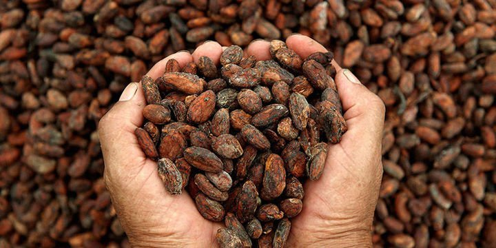 Emtia yatırımcısı ilk çeyrekte kakao ile kazandı