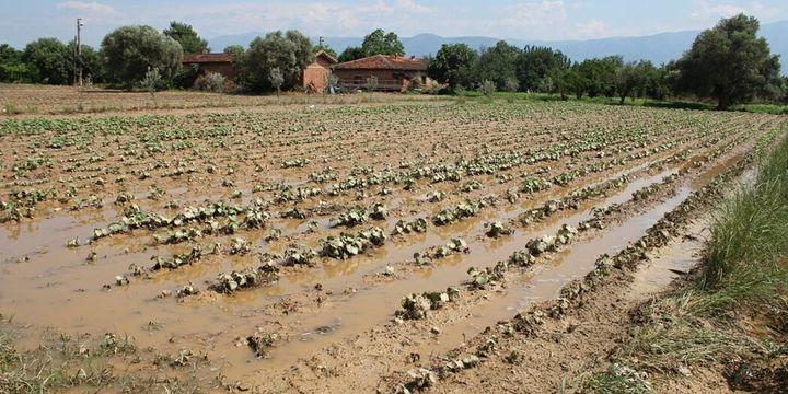 Mayıs yağışları tarım arazilerini vurdu