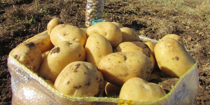 Maliyet arttı, ekim alanı azaldı, patates fiyatı tavan yaptı
