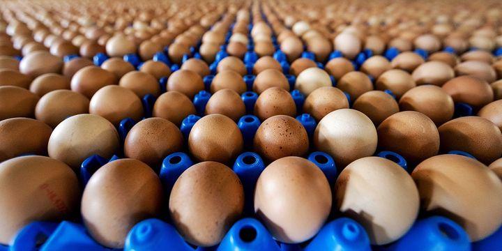 Yumurta üreticilerinden KDV çıkışı