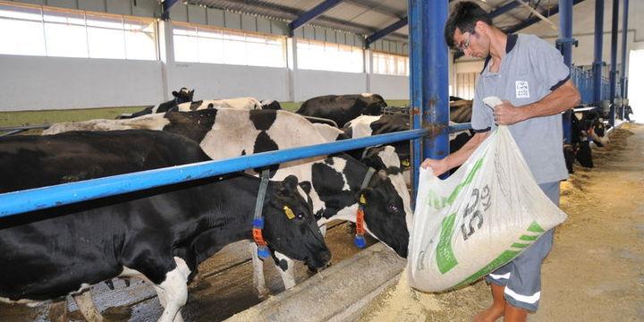 Süt üreticileri yem ve çiğ süt fiyatında revizyon bekliyor