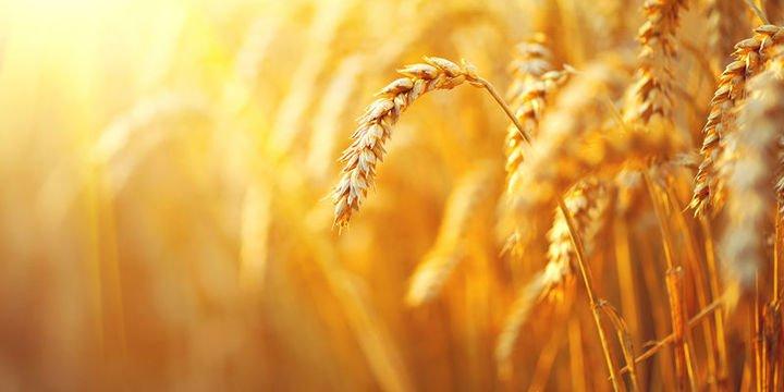 Tarım ÜFE Haziran