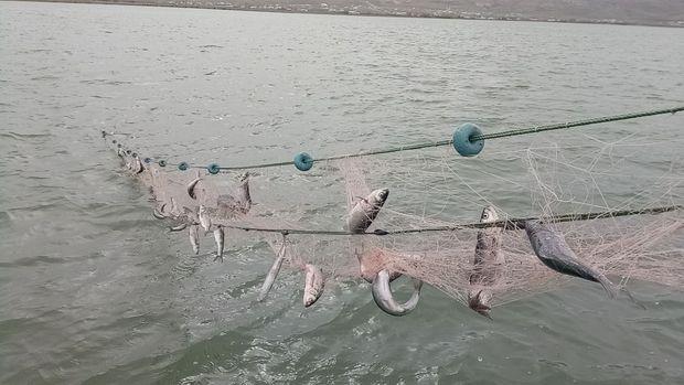 Av yasağında 141 ton inci kefali ele geçirildi