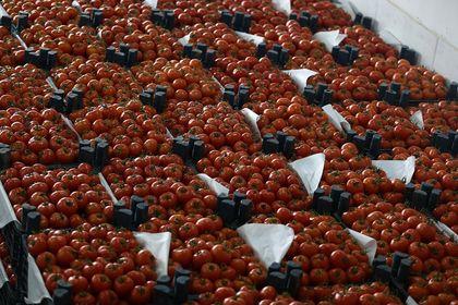 Yaş meyve sebzede 1,27 milyar dolarlık ihracat