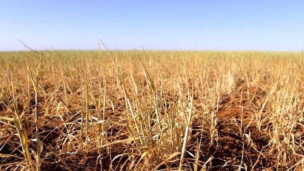 Irak'ta kuraklık tarım sektörünü vurdu