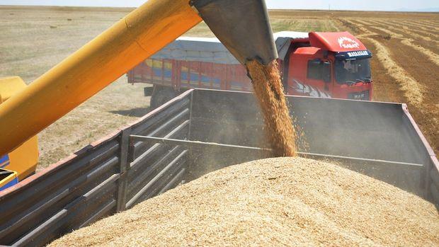 Tarım Kredi Kooperatifleri arpa alımını sürdürecek