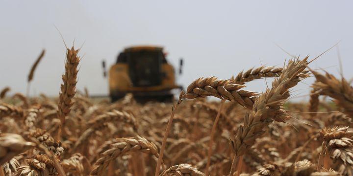 ZMO, buğday raporunu yayımladı