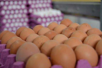 Yumurta üretimi yüzde 4,4 arttı