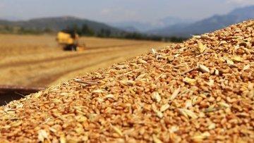 TMO ithal buğday için alım ihalesi açtı