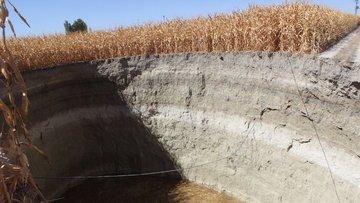 Mısır hasatı sırasında tarlada obruk oluştu