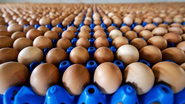 İSTYUMDER: 1 aylık yumurta stoğumuz kaldı