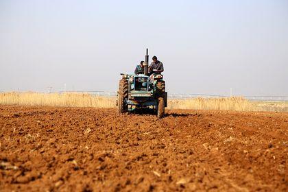 FAO: Suriye'deki buğday üretimi 29 yılın en düş...