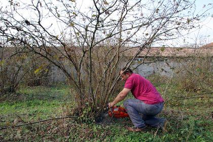6 dönümlük bahçedeki fındık ağaçlarını kesti