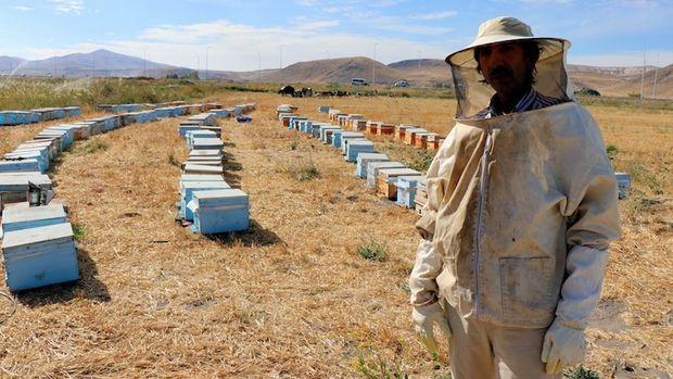 Bilinçsiz ilaçlama arıları telef etti