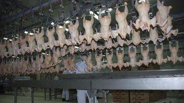 Malatya'da kanatlı et sektöründeki sıkıntı büyüyor