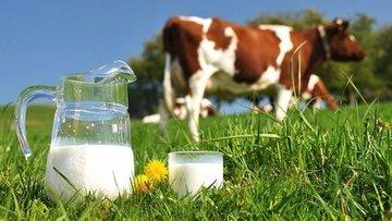 Eylül'de Tavuk yumurtası üretimi azaldı, toplanan inek sü...