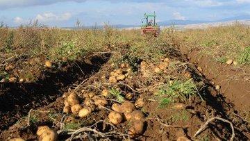 Türkiye, 160 bin ton patatesten 160 milyon liralık gelir ...
