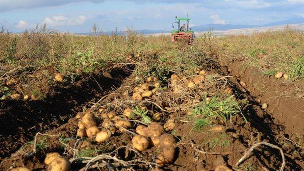 Türkiye, 160 bin ton patatesten 160 milyon liralık gelir hedefliyor
