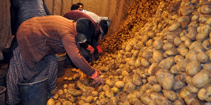 """""""Patates ve bakliyat fiyatları belirgin oranda yükseldi"""""""