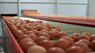 Yumurta üretimi Ekim'de yüzde 4,6 arttı