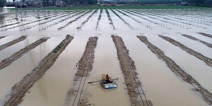Çiftçiler şiddetli yağış sonrası tarlaya kayıkla girdi