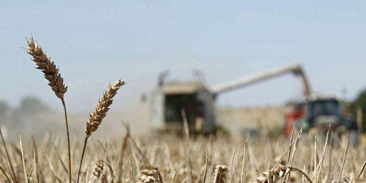 Küresel gıda fiyatları geçen yıl yüzde 3,5 düştü