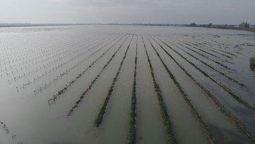 30 bin dönüm tarım arazisi sular altında kaldı