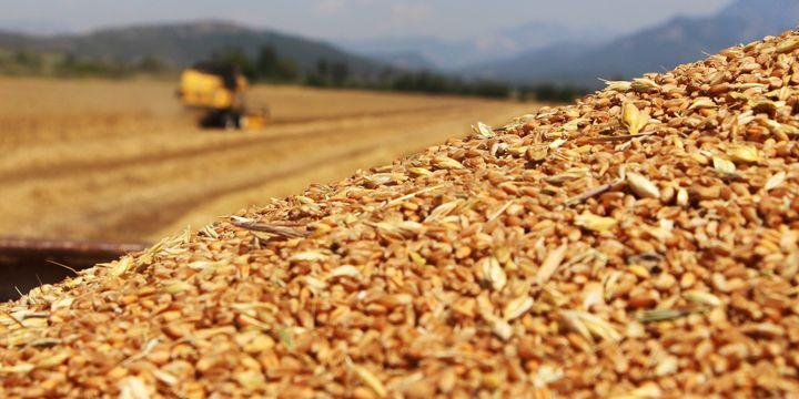UHK, buğdayda üretimden kaçışa dikkat çekti