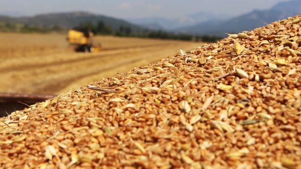 TMO, 300 bin ton mısır, 30 bin ton pirinç ithal edecek